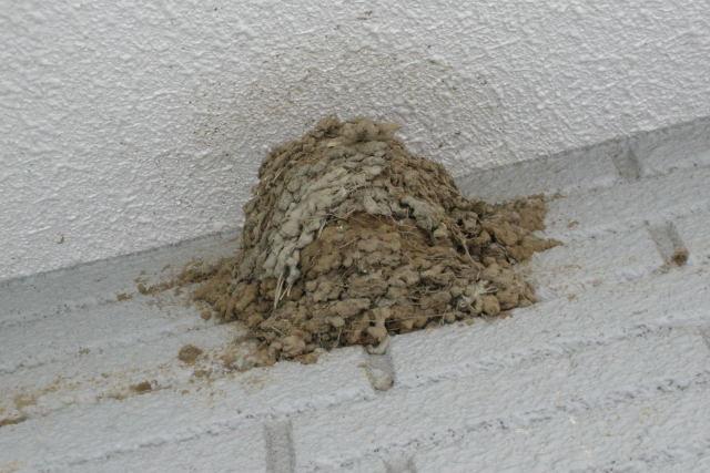 ツバメが巣立った後の巣
