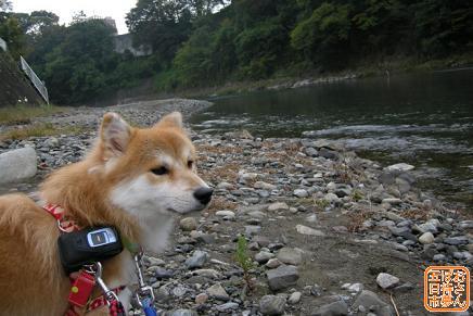 秋川渓谷にて